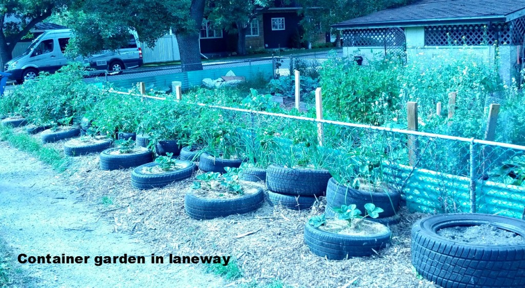 container garden in laneway sized
