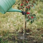 What Type of Mulch Should I Use When Planting New Trees in My Yard - Soil Kings - Bulk Landscaping Products - Featured Image