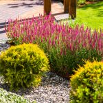 Mulch vs. Decorative Rock for Landscaping Design - Soil Kings - Bulk Landscaping Supplies - Featured Image