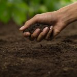 When to Use Garden Mix vs. Compost - Soil Kings - Bulk Landscaping Supplies - Featured Image