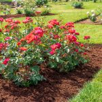Best Purposes for Mulch - Soil Kings - Landscaping Supplies Calgary - Featured Image